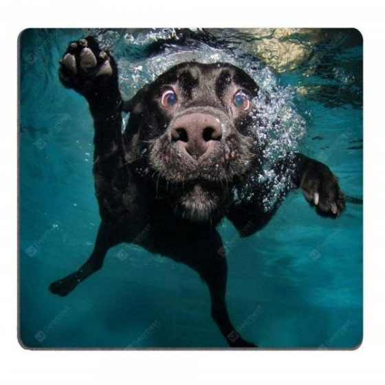 italiaunix-Funny Black Labrador Retriever Dog Swimming with Expressive Face Gaming Mousepad  Gearbest